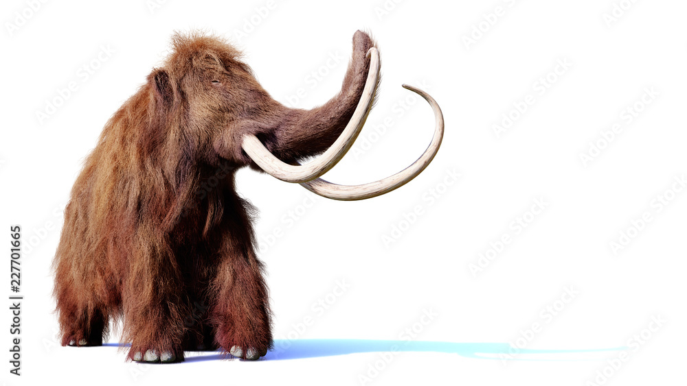 woolly mammoth, prehistoric mammal isolated with shadow on white background (3d render)