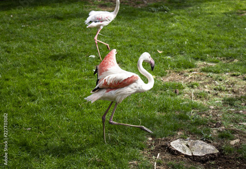 Flamingos in park Wallpaper Mural