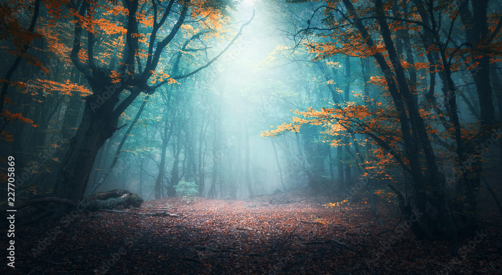 Fototapeta Beautiful mystical forest in blue fog in autumn. Colorful landscape with enchanted trees with orange and red leaves. Scenery with path in dreamy foggy forest. Fall colors in october. Nature background