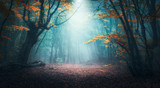 Fototapeta Forest - Beautiful mystical forest in blue fog in autumn. Colorful landscape with enchanted trees with orange and red leaves. Scenery with path in dreamy foggy forest. Fall colors in october. Nature background