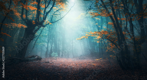 Fotobehang Bomen Beautiful mystical forest in blue fog in autumn. Colorful landscape with enchanted trees with orange and red leaves. Scenery with path in dreamy foggy forest. Fall colors in october. Nature background