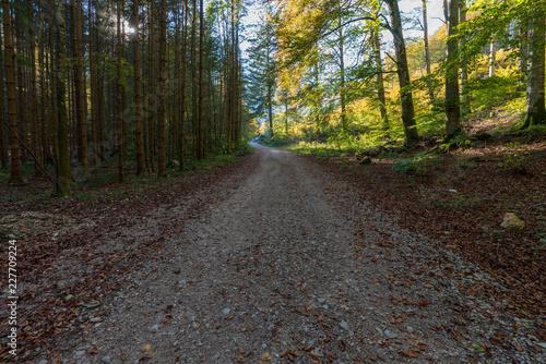 Poster Nature Wanderweg am Langbathsee mit vielen Laubbäumen im Herbst