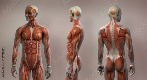 Stampa su Tela Muscles male front side back