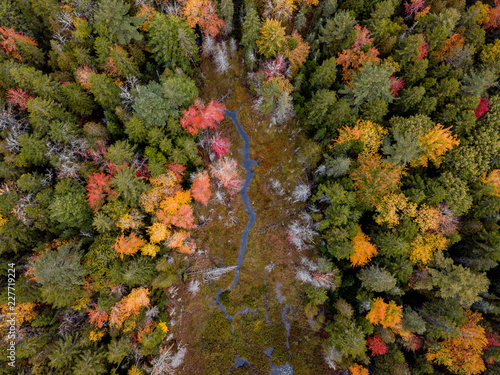 Drone Fall Foliage Canvas Print