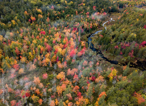Fall Foliage Drone Photo Wallpaper Mural