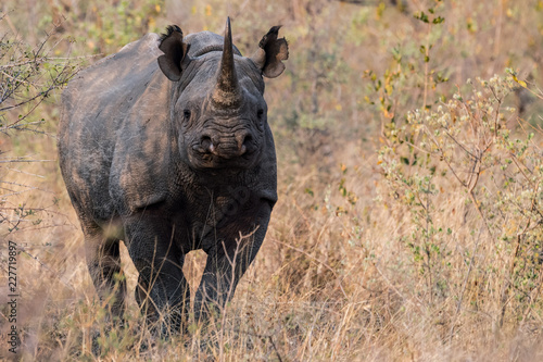 Black Rhino Strikes A Pose