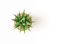 Top View Small Green Cactus Pl...