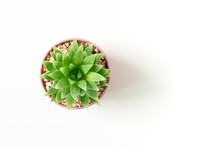 Top View Small Green Cactus Plant In Pot Isolated On White Desk Background With Copy Space.