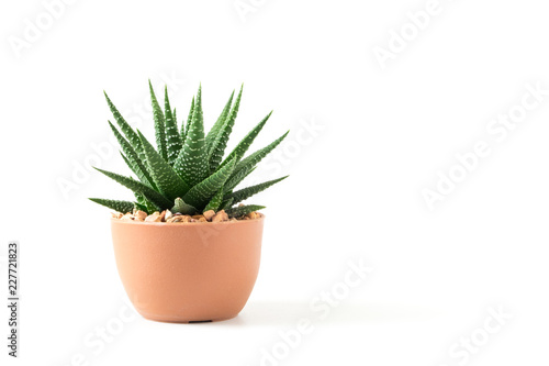 Canvas Prints Plant Small plant in pot succulents or cactus isolated on white background by front view