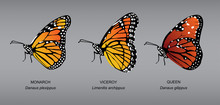 Butterfly Underwing Monarch Set Vector Illustration