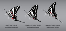 Butterfly Underwing Zebra Swallowtail Set Vector Illustration