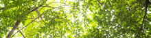 Trees In Forest . Nature Green Wood Sunlight Backgrounds