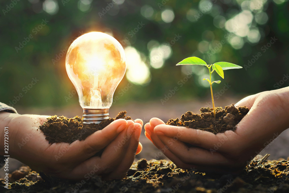 Fototapety, obrazy: hand holding lightbulb with small tree and sunshine. concept energy power in nature