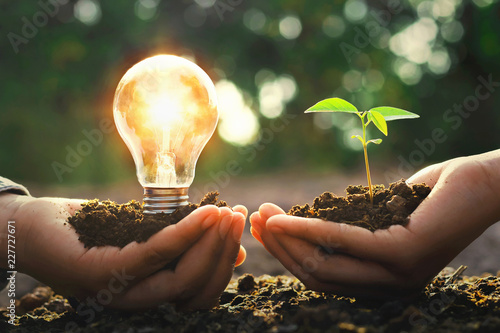 Photo hand holding lightbulb with small tree and sunshine