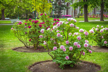 View Of Beautiful Garden With ...
