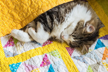 Tabby Cat Sleeping Wrapped Up In Colourful Quilt Cover
