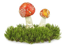Two Mushroom On The Green Moss, White Background.