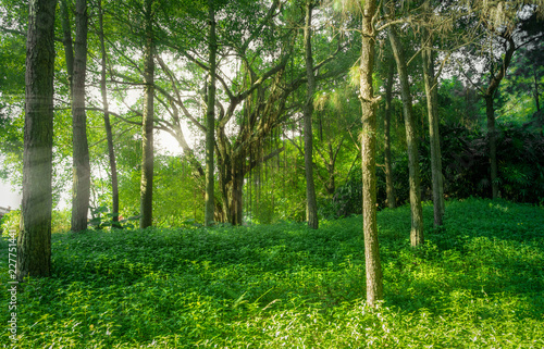 Foto op Canvas Weg in bos Landscape of forest with fog and sunbeams in nature background.