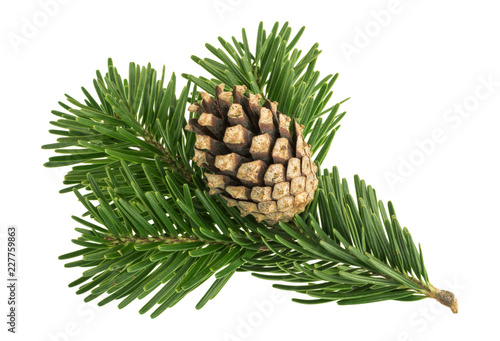 Obraz Fir tree isolated on white background - fototapety do salonu
