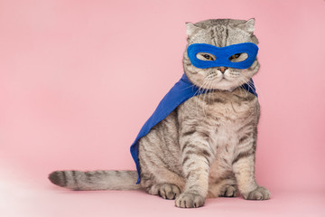 superheroj, škotski viski s plavim ogrtačem i maskom. Koncept superheroja, super mačke, vođe. Na ružičastoj podlozi. Macho i slatka mačka