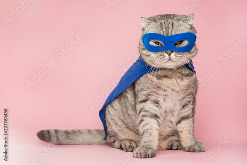 La pose en embrasure Chat superhero, scotch whiskey with a blue cloak and mask. The concept of a superhero, super cat, leader. On a pink background. Macho and cute cat
