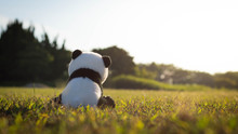 A Lonely Stuffed Toy Panda Sit...