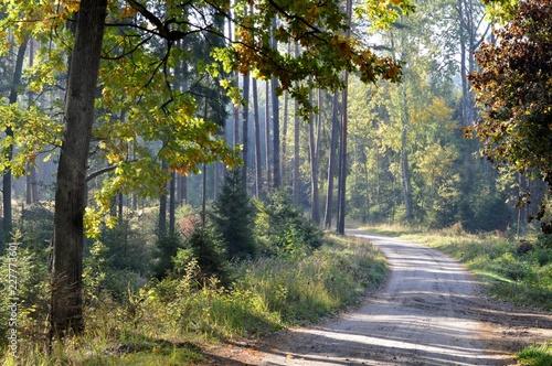 Türaufkleber Straße im Wald W Borach Tucholskich