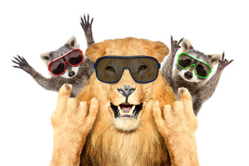 Portrait of a funny lion and two raccoon in sunglasses, showing a rock gesture, isolated on white background