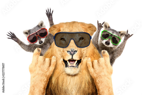 Autocollant pour porte Magasin de musique Portrait of a funny lion and two raccoon in sunglasses, showing a rock gesture, isolated on white background