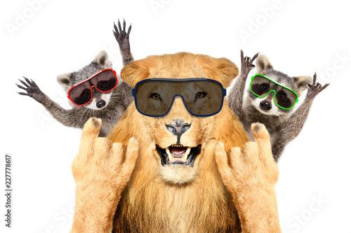 Fototapeta premium Portret śmieszne lew i dwa szopy w okularach przeciwsłonecznych, pokazując gest rocka, na białym tle