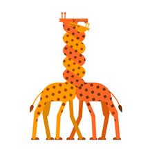 Giraffe Love. Twisted Neck Two Giraffes. Vector Animals
