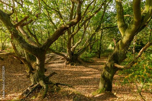 Fotografia, Obraz  Mousehold Heath 6