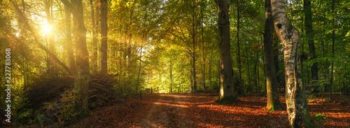 Obraz Herbstlicher Waldweg mit bunten Blättern - fototapety do salonu