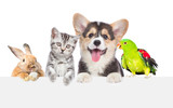 Fototapeta Zwierzęta - Group of pets together over white banner. isolated on white background