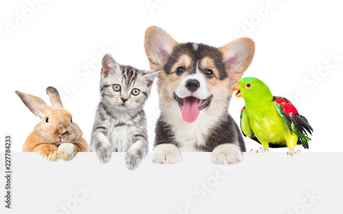 Group of pets together over white banner. isolated on white background © Ermolaev Alexandr