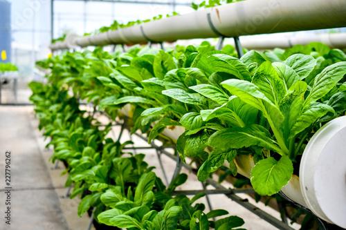 Fotografie, Obraz  organic vertical farming