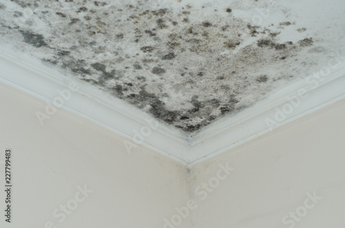 Fungus mold close up roof corner humid Canvas Print