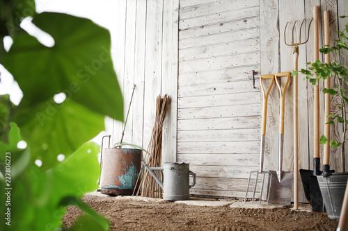 gardening tools on wooden white wall, equipment for vegetable garden , copy spac Fototapeta