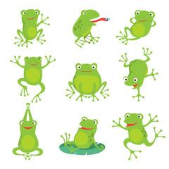 Kreskówka żab. Zielony rechot kumak na liściach lotosu w stawie. Wektorowi zwierzęcy charaktery ustawiający płazi kumaka rysunek, zielonej żaby kolekci ilustracja