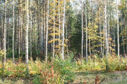 Las jesienią - 227815004