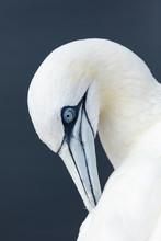 Portrait Of White Bird