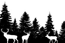 Forest With Deers