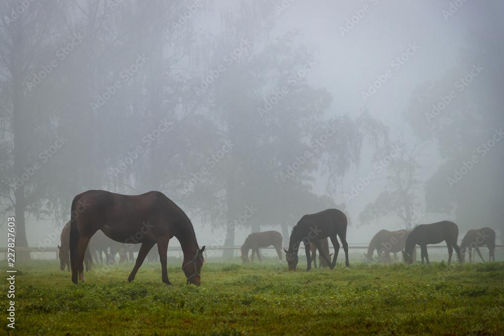 Herd of horses in autumn fog
