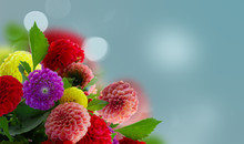 Dahlia Fresh Mixed Flowers Bouquetob Blue Background Banner