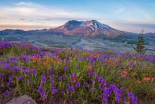 Mt St Helens With Wildflowers At Sunrise