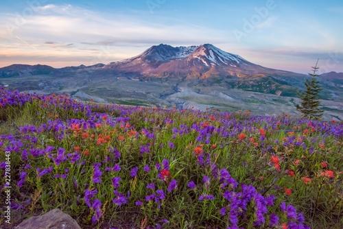 Obraz na plátně Mt St Helens with wildflowers at sunrise