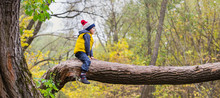 A Little Boy Sits On A Fallen Tree Trunk, Dressed In Warm Clothes And A Hat With A Punpon. Long Wide Panorama