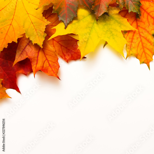 Frame of multicolored maple leaves on white Background