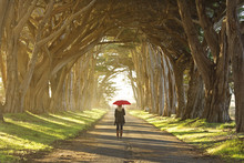 Woman Walking Through A Tunnel Of Old Trees