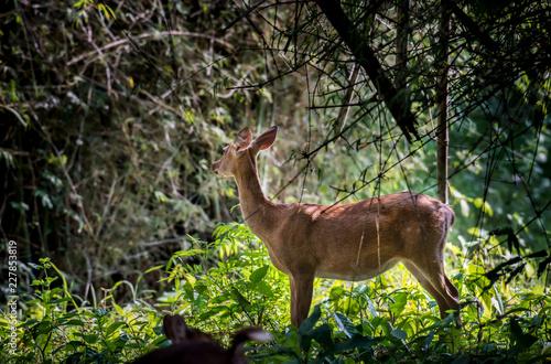 Deurstickers Hert Deer herds are in the wildlife sanctuary.